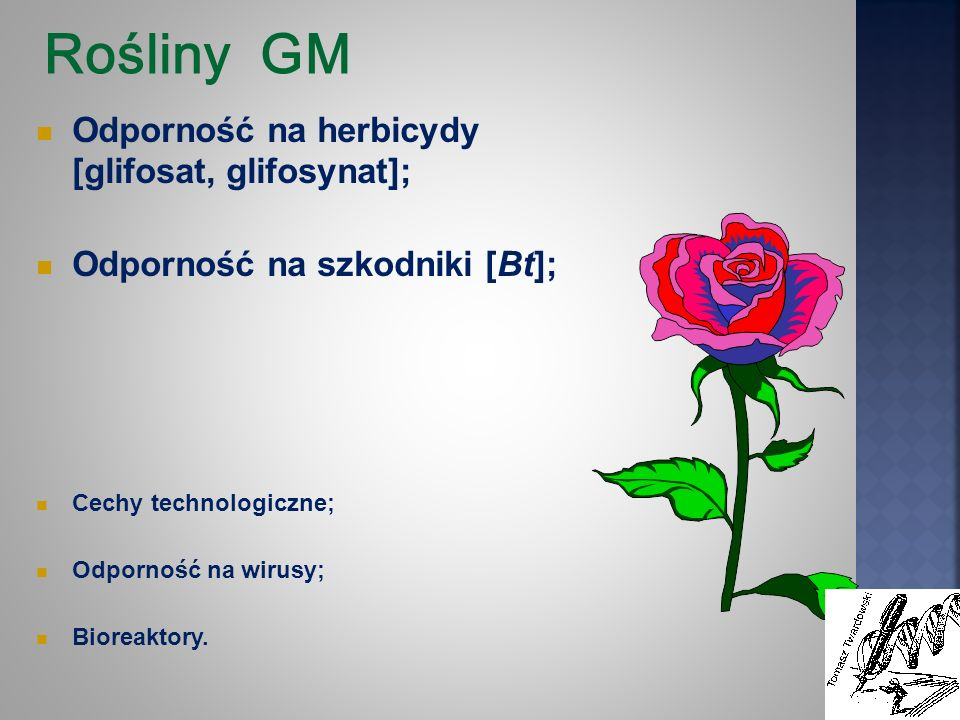Rośliny GM Odporność na herbicydy [glifosat, glifosynat];